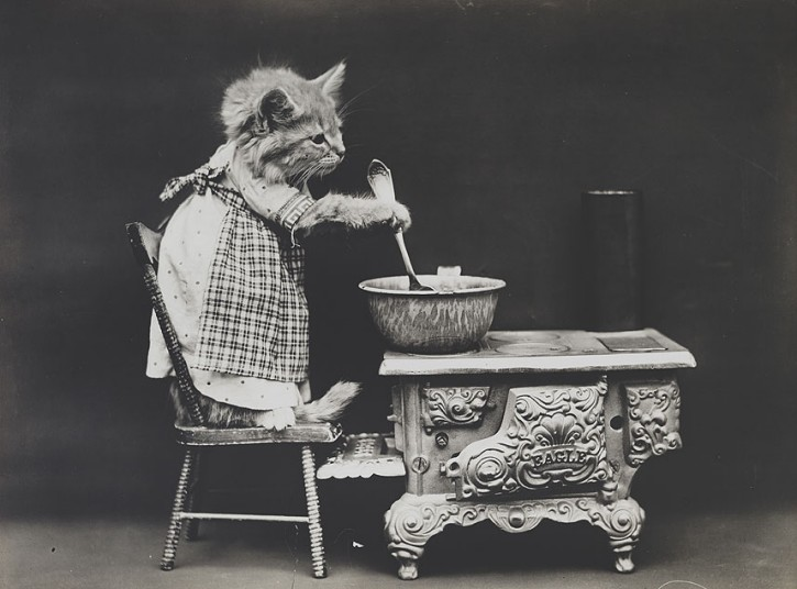 gato cazuela