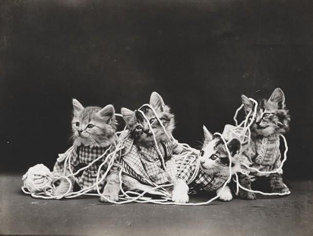 gatos lana